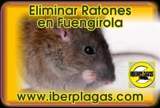 Eliminar Ratones en Fuengirola