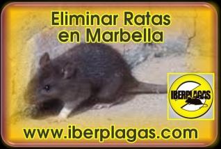 Eliminar Ratas en Marbella