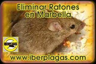 Eliminar Ratones en Marbella