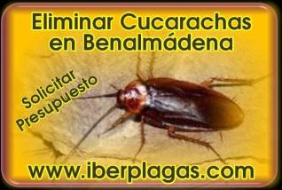Eliminar Cucarachas en Benalmádena
