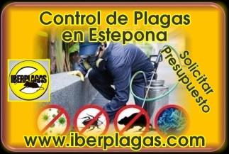 Control de plagas en Estepona