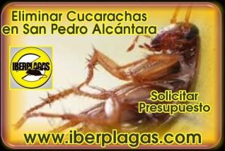 Eliminar cucarachas en San Pedro Alcántara
