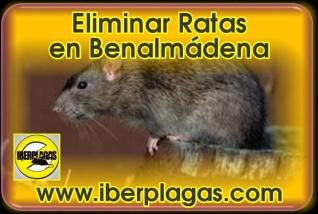 Eliminar Ratas en Benalmádena
