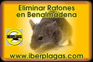Eliminar Ratones en Benalmádena