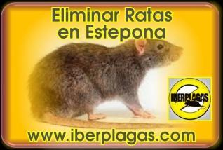 Eliminar Ratas en Estepona
