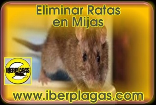 Eliminar Ratas en Mijas