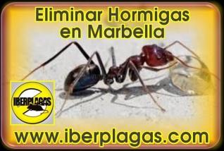 Eliminar hormigas en Marbella