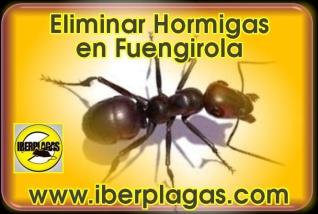 Eliminar hormigas en Fuengirola