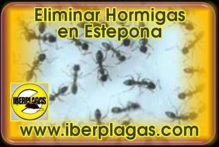 Eliminar Hormigas en Estepona