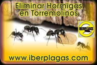Eliminar Hormigas en Torremolinos