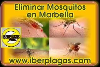 Eliminar mosquitos en Marbella