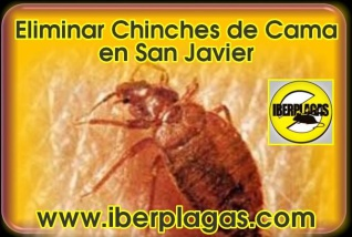 Eliminar chinches de cama en San Javier