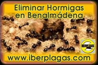 Eliminar Hormigas en Benalmádena