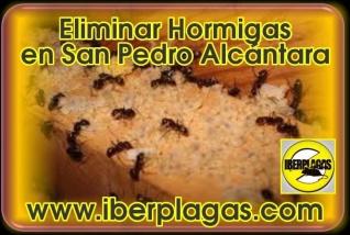 Eliminar Hormigas en San Pedro Alcántara