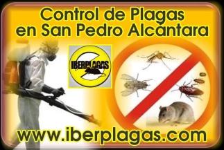 Control de Plagas en San Pedro Alcántara