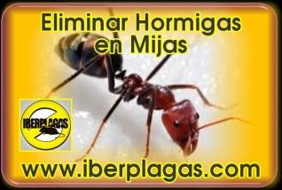 Eliminar hormigas en Mijas