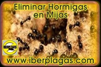 Eliminar Hormigas en Mijas Costa