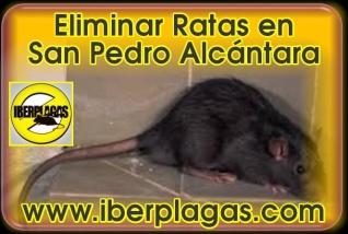 Eliminar Ratas en San Pedro Alcántara