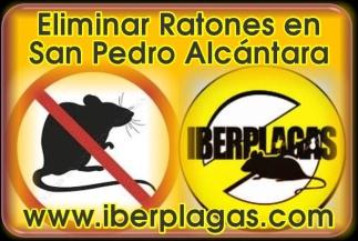 Eliminar Ratones en San Pedro Alcántara