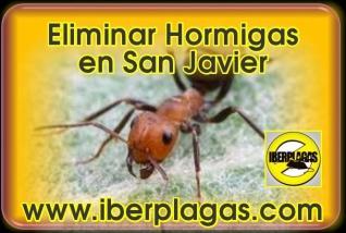 Eliminar Hormigas en San Javier