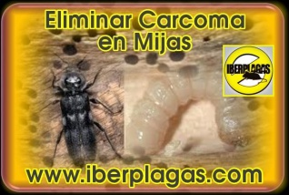 Eliminar Carcoma en Mijas