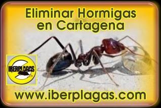 Eliminar hormigas en Cartagena