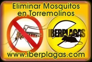 Eliminar Mosquitos en Torremolinos
