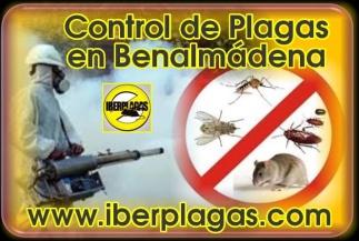 Control de plagas en Benalmádena
