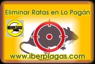 Eliminar ratas en Lo Pagán