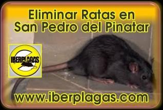 Eliminar Ratas en San Pedro del Pinatar