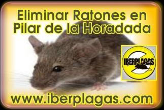 Eliminar ratones en Pilar de la Horadada