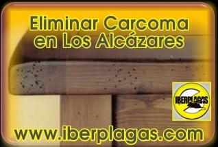 Eliminar Carcoma en Los Alcázares