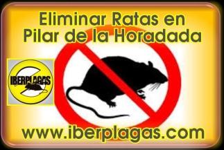 Eliminar Ratas en Pilar de la Horadada