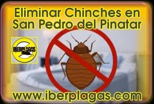 Eliminar Chinches en San Pedro del Pinatar