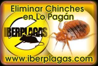 Eliminar Chinches en Lo Pagán