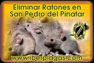 Eliminar ratones en San Pedro del Pinatar