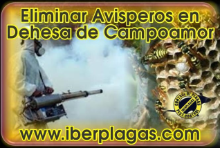 Eliminar avispas en Dehesa de Campoamor