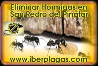 Eliminar Hormigas en San Pedro del Pinatar