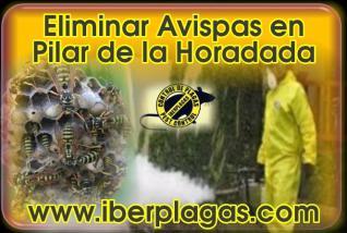 Eliminar avispas en Pilar de la Horadada
