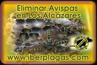 Eliminar avispas en Los Alcázares