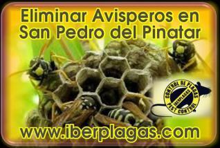 Eliminar avispas en San Pedro del Pinatar