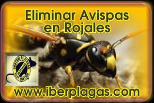 Eliminar Avispas en Rojales
