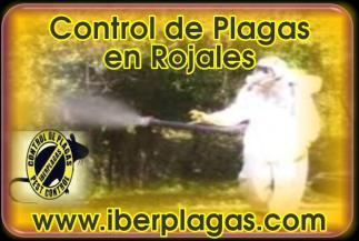 Control de Plagas en Rojales