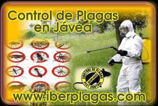 Control de Plagas en Jávea