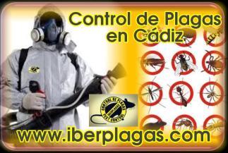 Control de Plagas en Cádiz