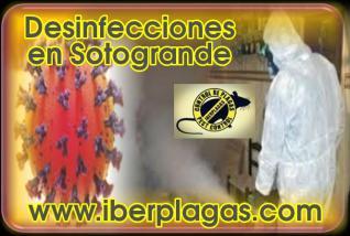 Desinfecciones en Sotogrande