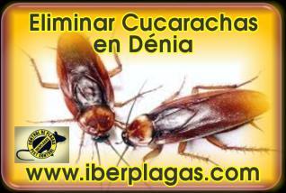 Eliminar Cucarachas en Dénia