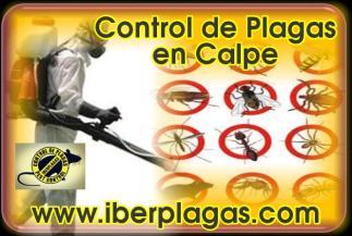 Control de Plagas en Calpe