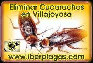 Eliminar cucarachas en Villajoyosa