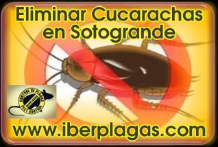 Eliminar Cucarachas en Sotogrande